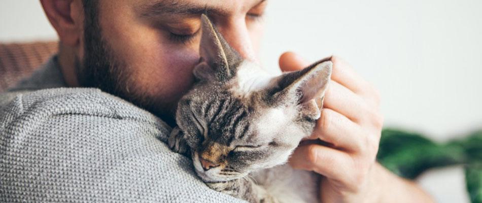 Que faut-il savoir avant d'adopter un chat