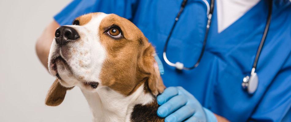 Trouver un vétérinaire de garde pour urgences
