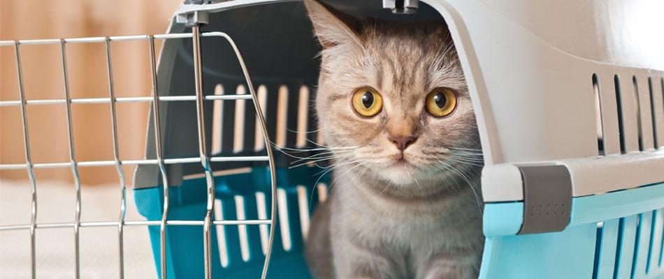 Bien choisir sa cage de transport pour chat