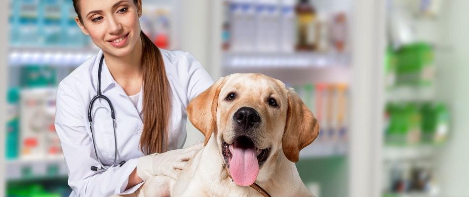 Formation pour devenir vétérinaire
